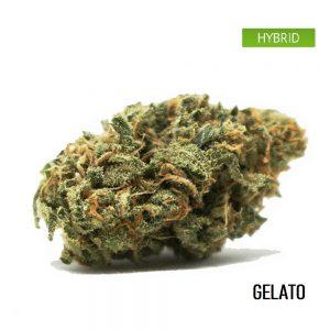 buy gelato online, gelato weed strain
