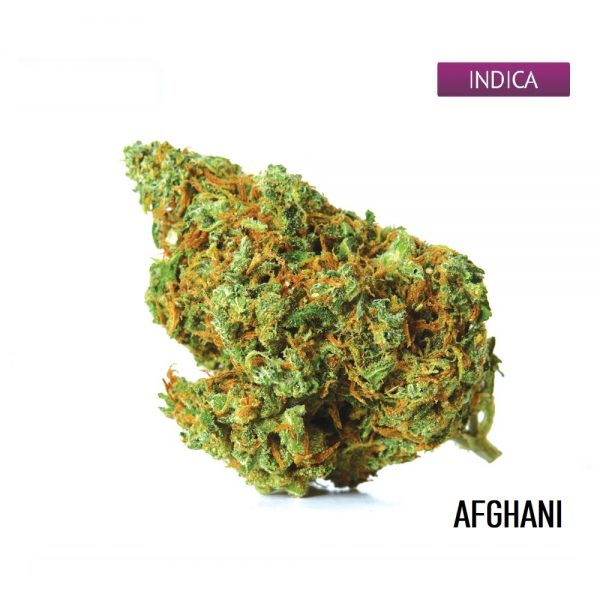 Buy Afghani Cannabis Strain, Afghani Weed Strain
