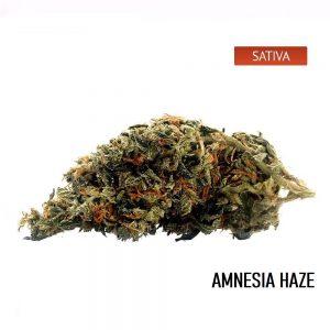 Buy Amnesia Haze Cannabis Strain Online, Amnesia Haze Weed Strain