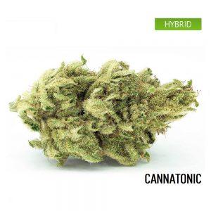 Buy Cannatonic Weed Strain,Cannatonic Weed Strain