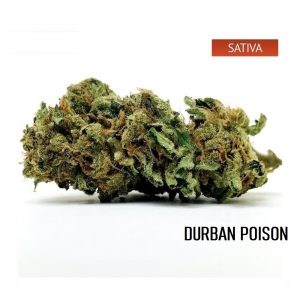 Buy Durban Poison Cannabis Strain, Durban Poison Weed Strain
