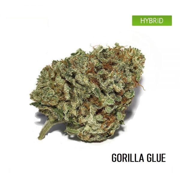 buy Gorilla glue weed strain online