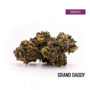 Buy Grand Daddy Marijuana Strain, Grand Daddy Weed Strain