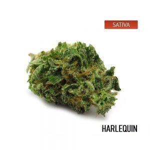 Buy Harlequin Marijuana Strain Online, Harlequin Marijuana Strain