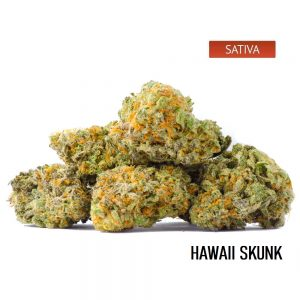 Buy Hawaii Skunk Cannabis Online, Hawaii Skunk Weed Strain