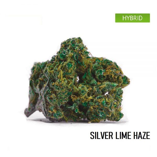 Buy Silver Lime Haze Weed Strain, Silver Lime Haze Cannabis Strain