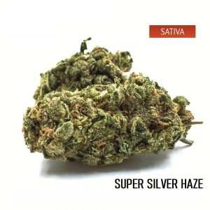 buy Super Silver Haze Cannabis Strain Online
