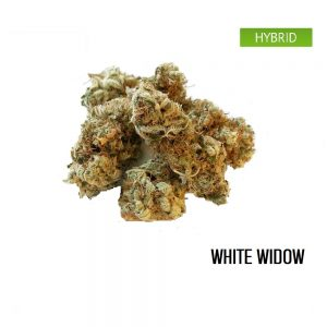 Buy White Widow Weed Strain
