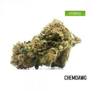 Buy Chemdawg Cannabis Strain, Chemdawg Weed Strain