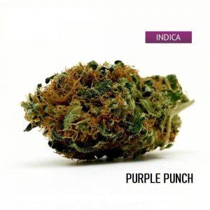 Buy Purple Punch Weed Strain Online, Purple Punch Weed Strain