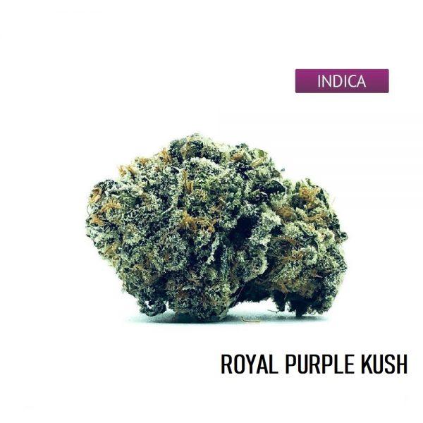 Buy Royal Purple Kush Cannabis Strain Online, Royal Purple Kush Weed Strain