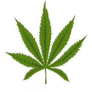 1g free Weed